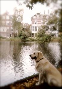 Calvin in Vondelpark